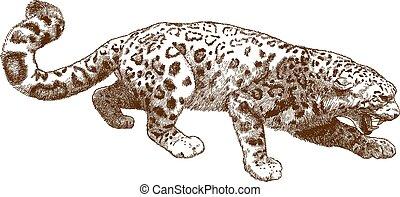 metszés, leopárd, hó, ábra