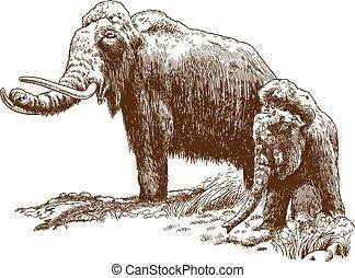 metszés, mammoths, gyapjas, két, ábra