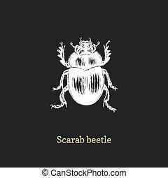 metszés, skicc, ábra, ganajtúróbogár, rovar, vector., húzott, beetle., style.