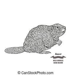 metszés, skicc, húzott, ábra, kéz, háttér., vektor, beaver., erdő, állat, tinta, fekete, fehér, style.