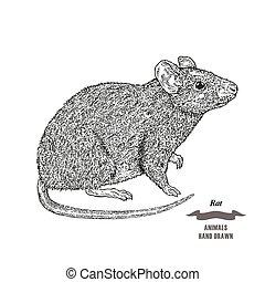 metszés, skicc, vagy, ábra, kéz, háttér., patkány, vektor, fekete tinta, animal., húzott, fehér, egér, style.