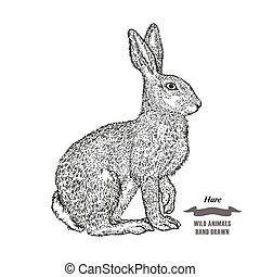 metszés, skicc, vagy, mezei nyúl, ábra, kéz, háttér., rabbit., vektor, black erdő, állat, tinta, húzott, fehér, style.