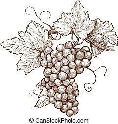 metszés, szőlő, elágazik