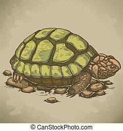 metszés, tengeri teknős, ábra