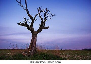 mező, elhagyott, fa, aszalt