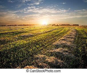 mező, elvág, fű