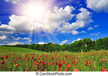 mező, fényes, mák, felett, nap