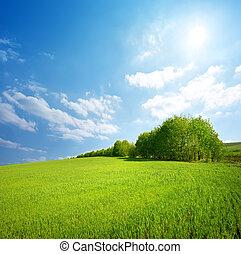 mező fű, bitófák