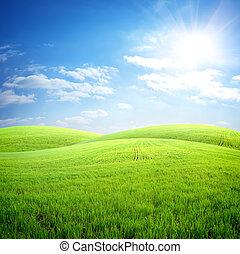 mező fű, friss