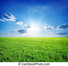 mező fű