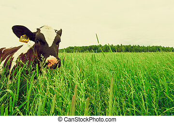 mező fű, tehén, friss