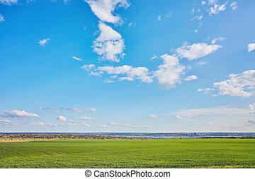 mező fű, zöld, friss