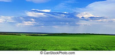 mező fű, zöld, grows