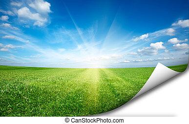 mező, friss, ég blue, zöld, böllér, fű, ssun