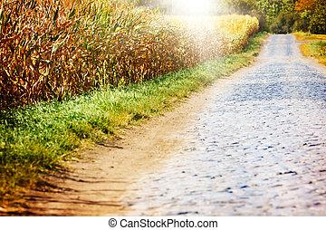 mező, gabonaszem, út