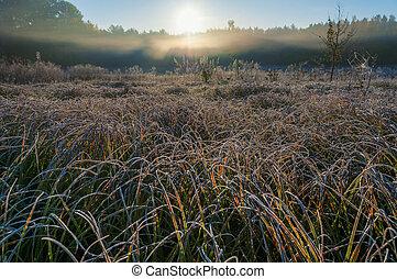 mező, jeges, reggel