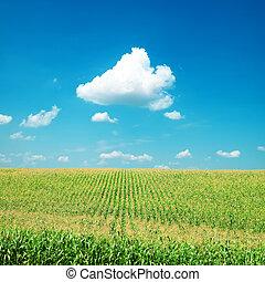 mező, kukorica, elhomályosul, zöld, alatt