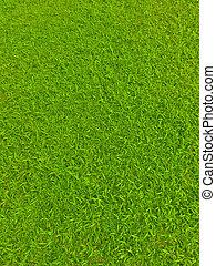 mező, labdarúgás, zöld fű