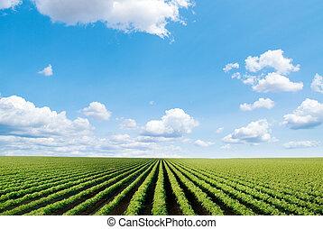 mező, művelt