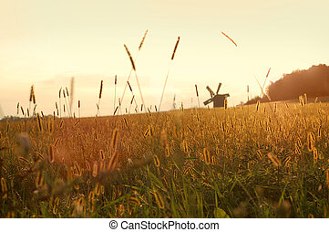 mező, napnyugta