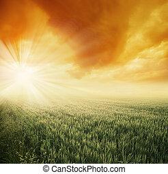 mező, napos, reggel