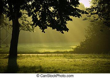 mező, napos