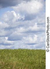mező, napos, zöld, nap