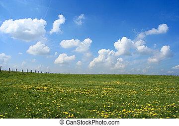 mező, nyílik