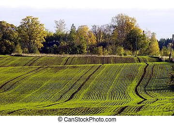 mező, tél, termés