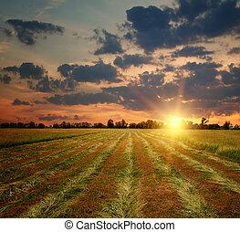 mező, vidéki táj, napnyugta