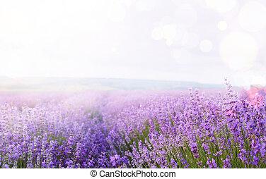 mező, virág, sky.