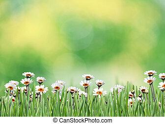 mező, virág