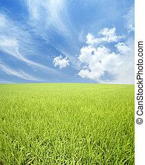 mező, zöld ég