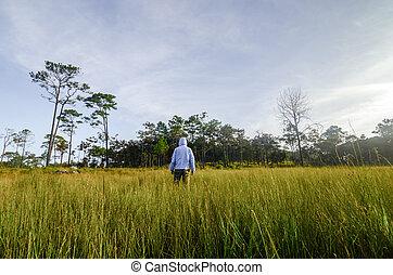 mező, zöld, ember