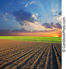 mezőgazdasági, naplemente terep