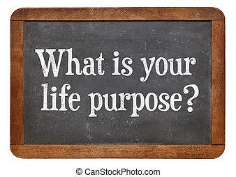 mi, -e, élet, ?, terv