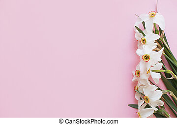 minimális, virágos, modern, menstruáció, határ, rózsaszínű, köszönés, elegáns, gyönyörű, card., háttér, nárciszok