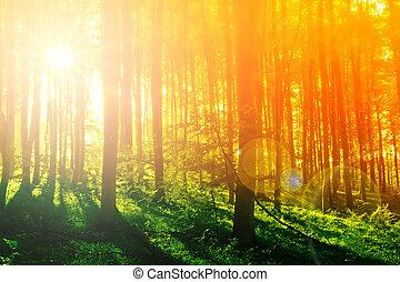 misztikus, színes, nap, reggel, erdő, fénysugár