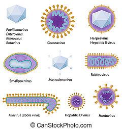morfológia, közös, eps8, viruses