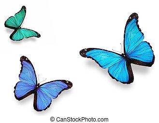 """""""morpho"""", pillangók, fehér, három, elszigetelt"""