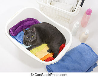 mosoda, színes, műanyag, lemos, kosár, white macska