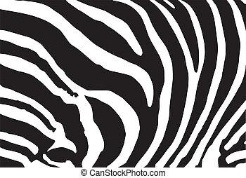 motívum, elvont, struktúra, vektor, zebra bőr, nyomtat