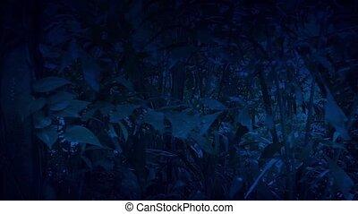 mozgató, át, dzsungel, éjszaka