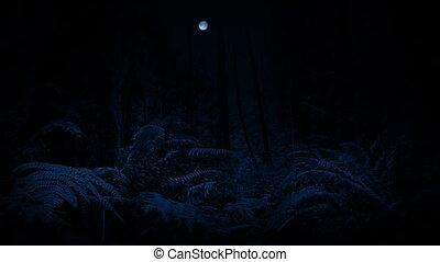 mozgató, éjszaka, át, erdő, hold