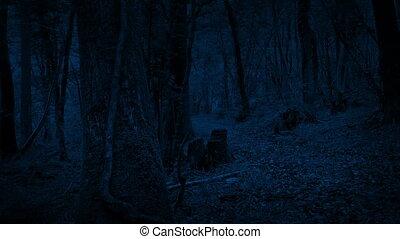 mozgató, út, lövés, erdő, éjszaka