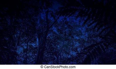 mozgató, rainforest, át, éjszaka
