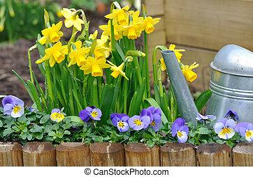 nárciszok, kert, brácsa