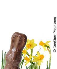 nárciszok, nyuszi, csokoládé