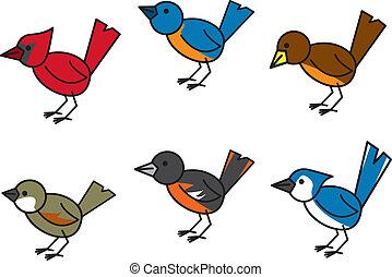 népszerű, madarak