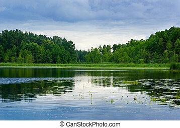nézet., tó erdő